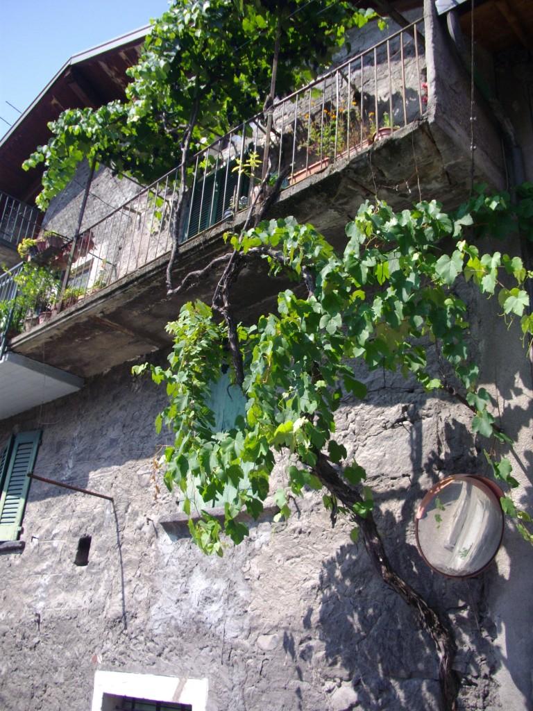 Bienno pergolato d'uva