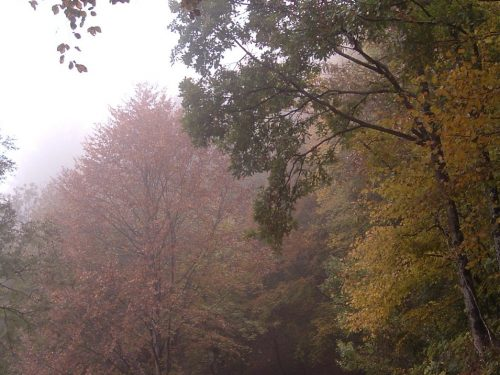 Autunno, parole di poesia nel migrare delle stagioni