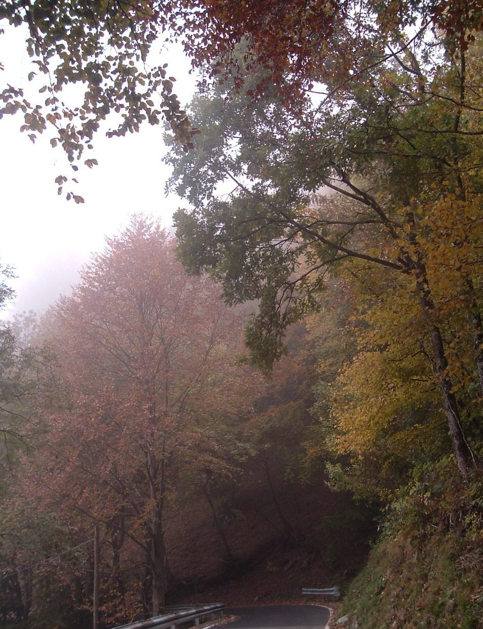 Nebbia d'autunno verso il Passo di Ganda, Altopiano Selvino Aviatico