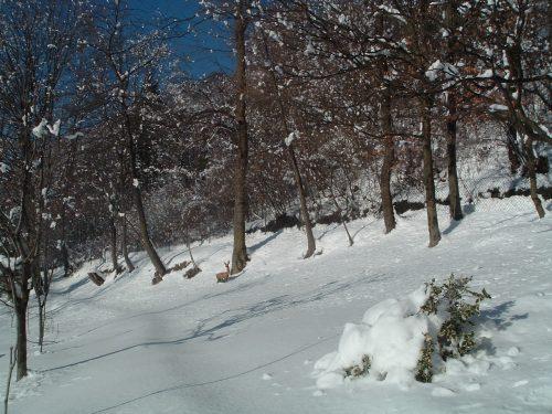 Malinconie d'inverno, poesia e prosa di un tempo lontano