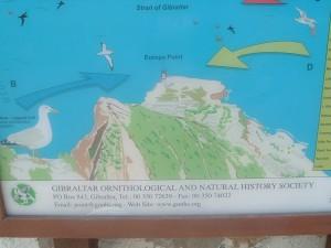 La mappa rappresentativa del punto di incontro tra Mare Mediterraneo e Oceano Atlantico, punta Europa (Gibilterra)
