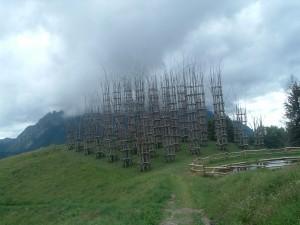 La Cattedrale Vegetale del Monte Arera