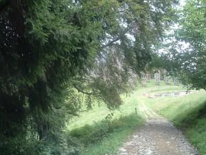 La prima vista della Cattedrale Vegetale