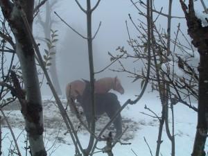 Cavalli nella bufera