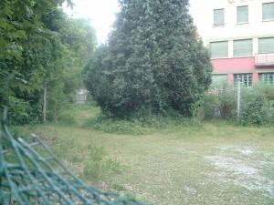 Il cortile davanti alla Sciesopoli Selvino aggredito dalla vegetazione, 2013