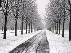 By Luciana Spinelli, 1 gennaio 2009, uno dei tanti viali contornati da filari di alberi