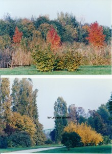 Parco Nord, by Luciana Spinelli, ottobre