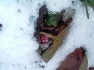 Anima di germoglio sotto la neve, Amora di Aviatico