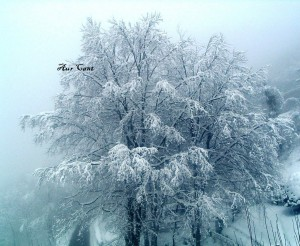 """""""Ho ascoltato le poesie degli alberi frondosi quando, carichi di neve, svettavano al cielo e mi portavano fin lassù con le loro lunghe dita di diamanti…"""""""