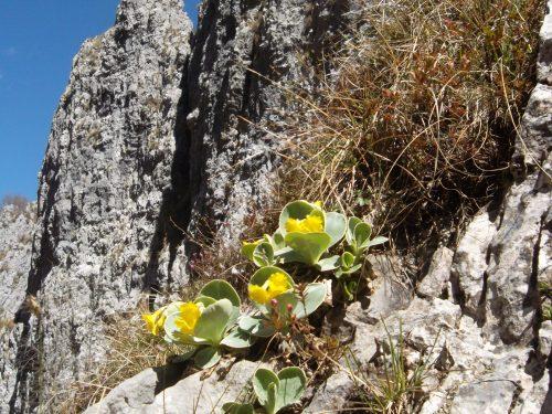 Terra di montagna, roccia e radici legate dalla speranza.